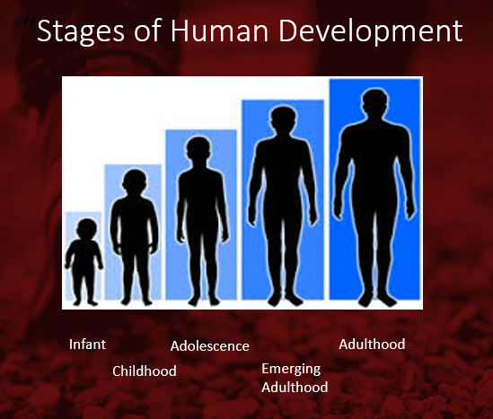 a discussion on the stages of human development Best human development quizzes - take or create human development quizzes & trivia test yourself with human development quizzes, trivia, questions and answers.
